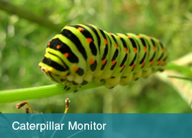 Caterpillar Monitor