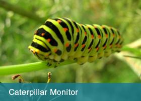 Caterpillar Monitor