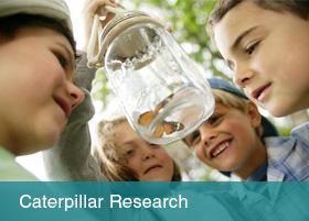 Catterpilar Research